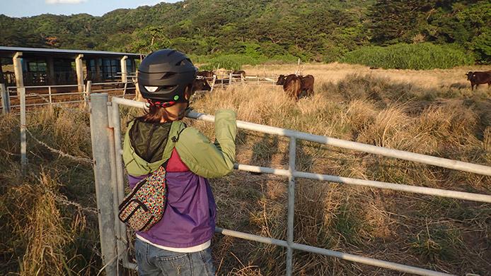 自転車を降りて黒い大きな牛たちを間近で観ている
